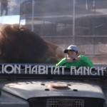 Smart Panda - Lion Habitat